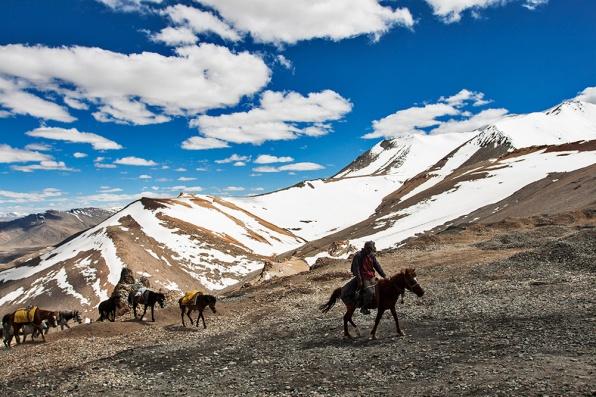 Ladakhi nomadic tribes